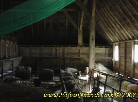 Vanwege de blauwtong staan alle schapen nu op stal. Boven de schapen hangt windbreekgaas dat is ingesmeerd met het insecticide Alfacron Plus.